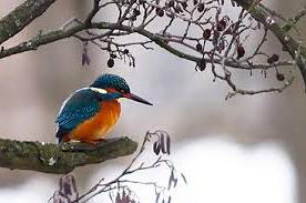 Rapporterade fåglar i Lerum
